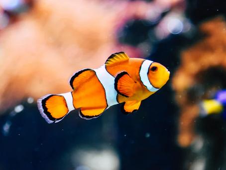 Saltwater Fish 6/11