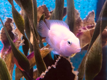 Freshwater Fish 11/1/19