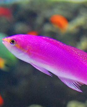 Saltwater Fish 11/13