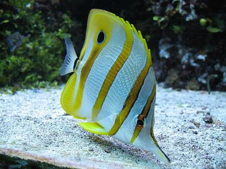 Saltwater Fish 3/15
