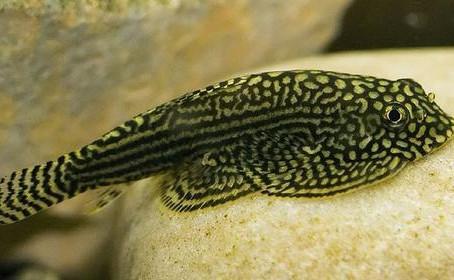 Freshwater Fish List 7/22/19