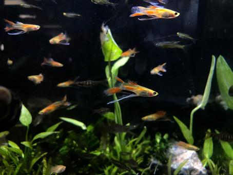 Freshwater Fish 10/14