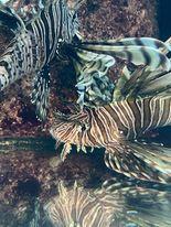 Saltwater Fish 1/8