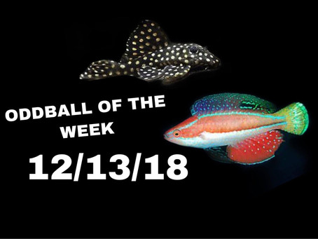 ODDBALL OF THE WEEK 12/13/18