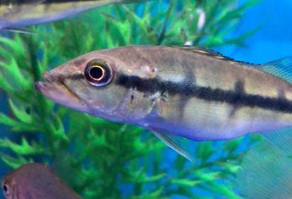 Freshwater Fish 11/21