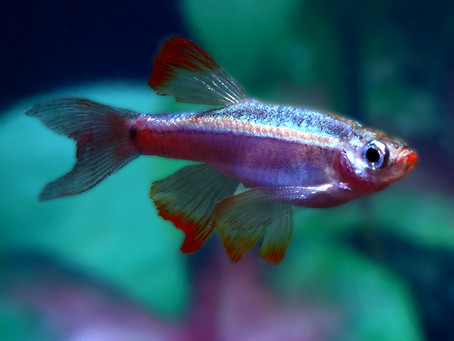Freshwater Fish 7/16/19