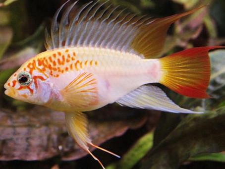 Freshwater Fish 5/28/19