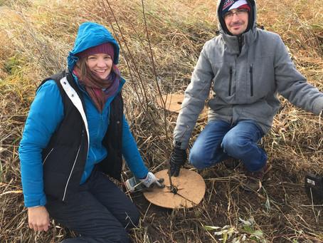 Planting Trees, Restoring Shorelines