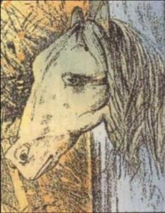 konj-ili-zaba