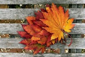 jesenjakreativnost