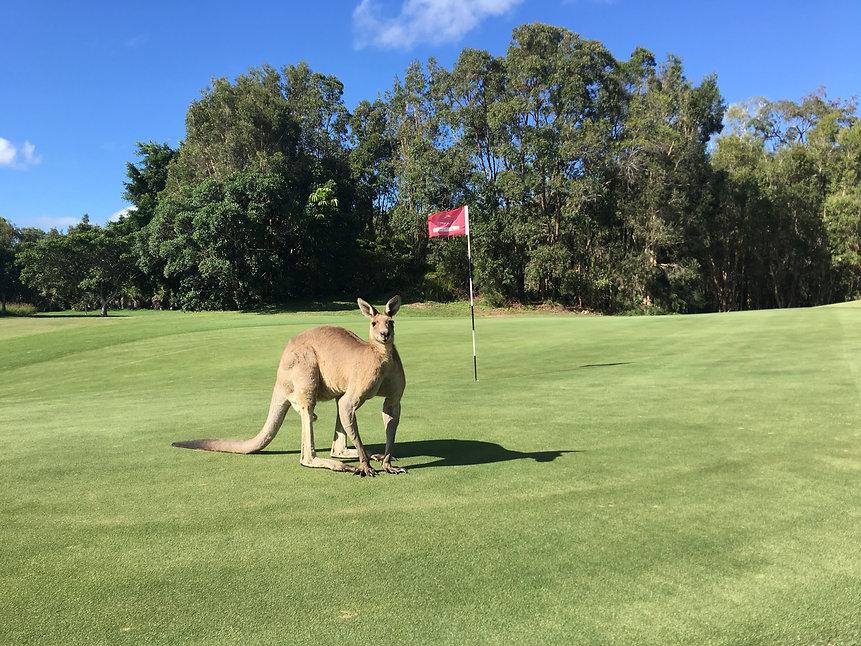 GPS_PelicanWaters_kangaroo1.JPG