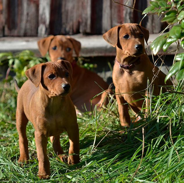 B-litter puppies, 2014