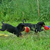 M-litter puppies, 2009