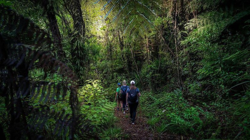 Walk Pelorus-Nydia Track-4.jpg