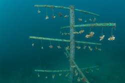 Coral tree Nursery - by Rob Aarsen