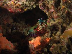 Mantis shrimp - by Eric Stokman