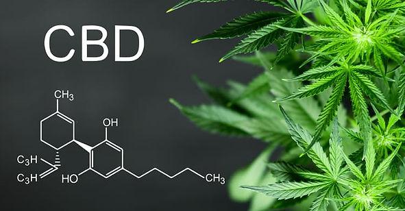CBD Cannabis picture.jpg