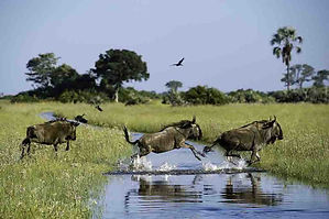 Okavango Private Lodge