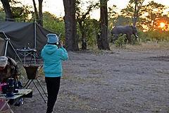 Botswana Okavango budget safaris