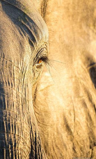 Camping safaris Botswana