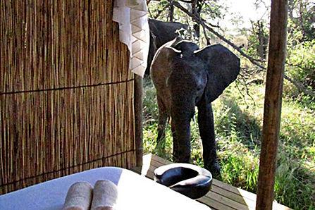 Mobile Safaris
