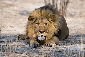 2020 Botswana Safaris