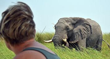Affordable Okavango safaris