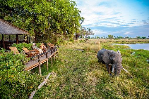 Botswana Vegan Safaris