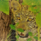 2021 safaris