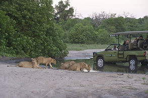 chobe-bakwena-lodge-activities-game-driv