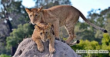 2019 Botswana Safaris