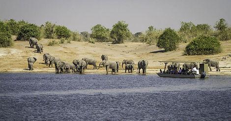 Okavango Chobe Tours