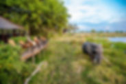 Delta Camp Okavango