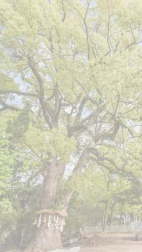春日神社について