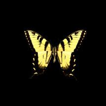 butterfly_10.jpg