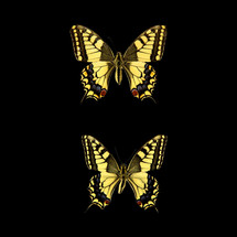 butterfly_05.jpg