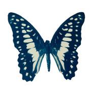 cyan_butterfly_13.jpg