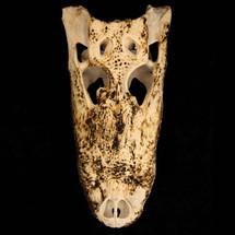 Bones_12.jpg