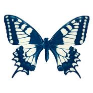 cyan_butterfly_01.jpg