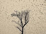 Starlings.jpg