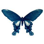 cyan_butterfly_05.jpg