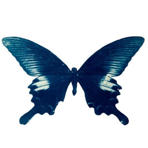 cyan_butterfly_09.jpg