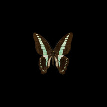 butterfly_09.jpg