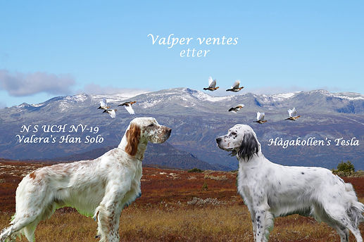 Valper ventes1.jpg
