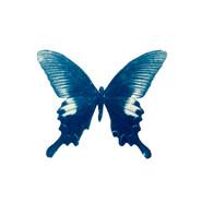 cyan_butterfly_06.jpg