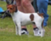 BIS unghund -Morris.jpg