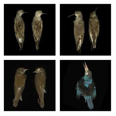 Birds_grid_SQ.jpg