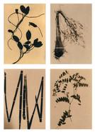 Flora&Fauna_grid_01.jpg