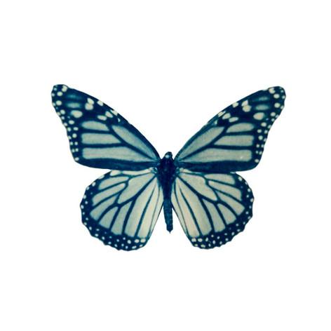 cyan_butterfly_07.jpg