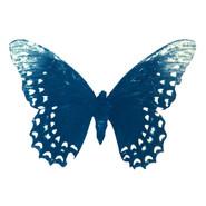 cyan_butterfly_02.jpg